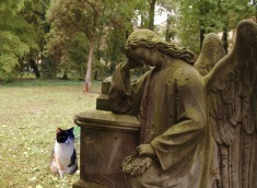 Lilith spies something in Sunhold's cemetery
