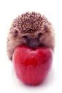 Hedgehog apple