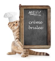 Cat_menu_Episode-9 copy