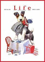 1921 July Life Dog