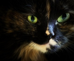 calico closeup pinterest