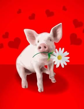 Pig Valentine