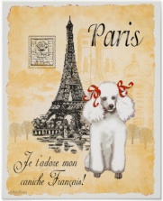 paris Poodle postcard