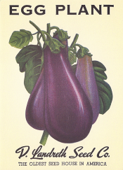 eggplant-note-card_1024x1024