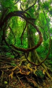 Tree circle limbs vines