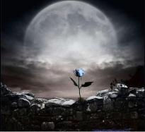 Blue Rose on Wall
