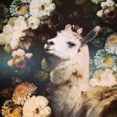 Greta sneaky goat
