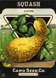 Vintage Squash seeds