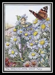 Michalemas daisy card