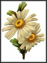 Vintage Daisy art