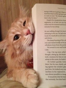 cat eat book