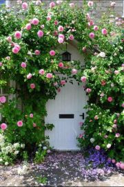 Rose covered door