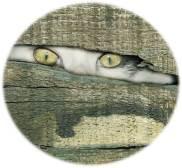 Cat Eyes Watching