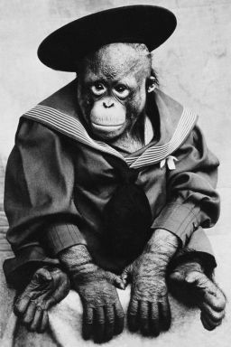Victorian Chimp sailor suit