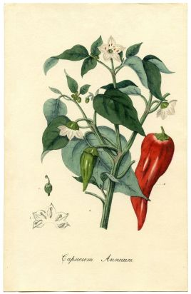 vintage red pepper
