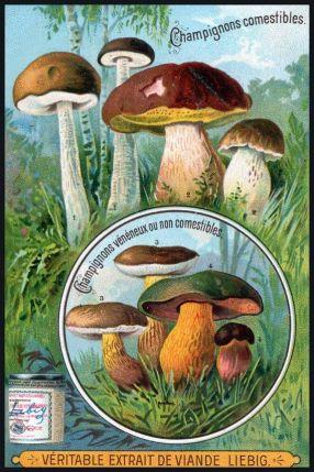 Mushroom ad Victorian