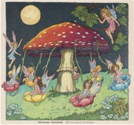 Mushroom faries Carrousel