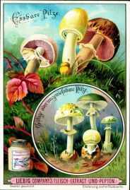 Mushrooms Victorian ad 2