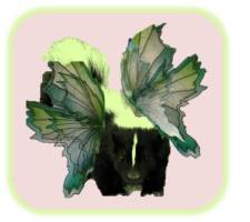 Green fairy skunk