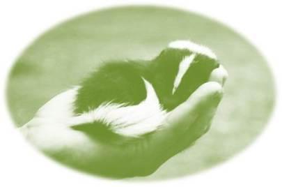green skunk palm