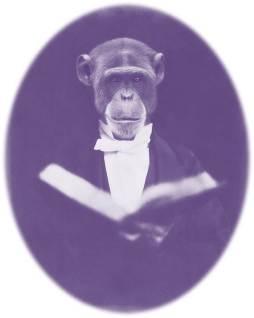 Reading Ape purple