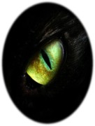 Black-GOLD_dragon-cat Eye