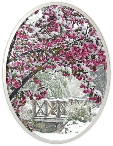 Cherry blossoms snow 2