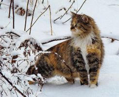 Lilith in snow