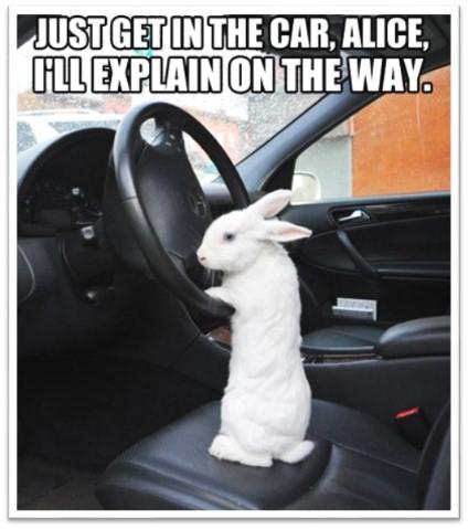 Bunny Get-in-Car