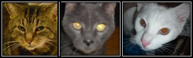Annette Abens Cats
