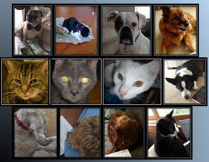 GCR pets