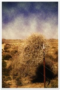 Tumbleweed vintage
