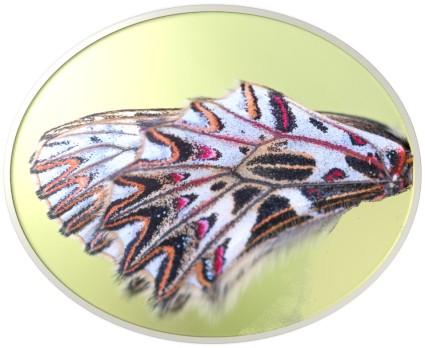 1 Butterfly wing