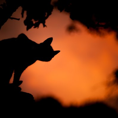 Cat silhouette Tree_saso-tusar-130051