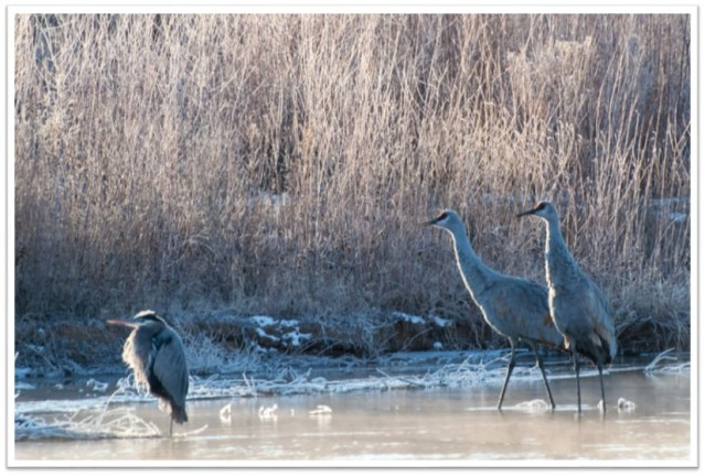Heron n others Winter Tim Price