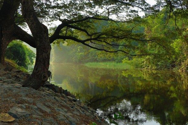 Peaches Pond nitish-kadam-43351
