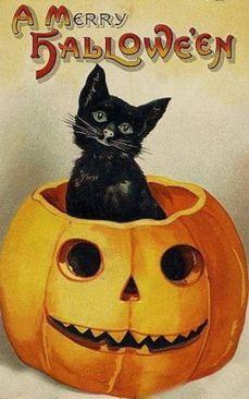 cat halloween