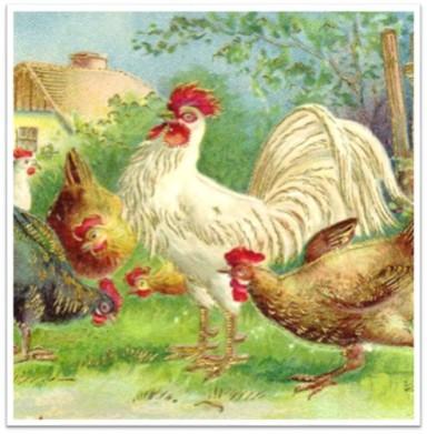 Chickens at cottage vintage