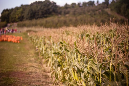 Corn Field People n Background bonnie-kittle-143218