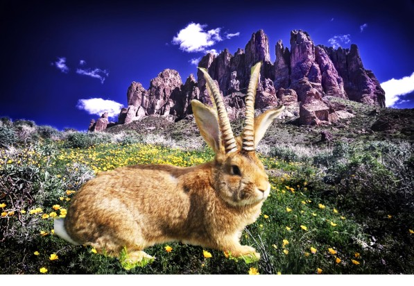 Jackalope Superstition Mountains