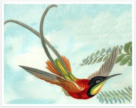 Hummingbird Kunstformen der Natur 1904