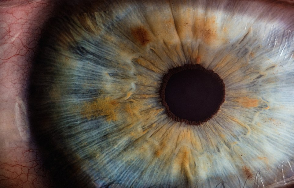 Eye white close paul-morris-184484.jpg