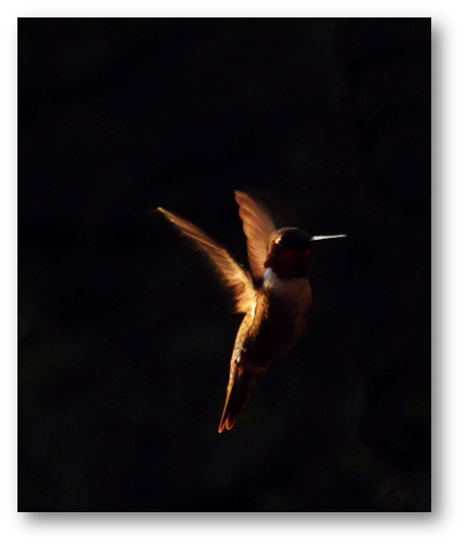 Hummingbird orange in dark Patti Black Unsplash