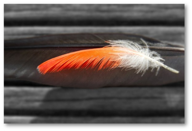 Orange Feather Alexander Sinn Unsplash