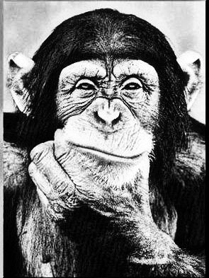 Chimp Thinker Smirk