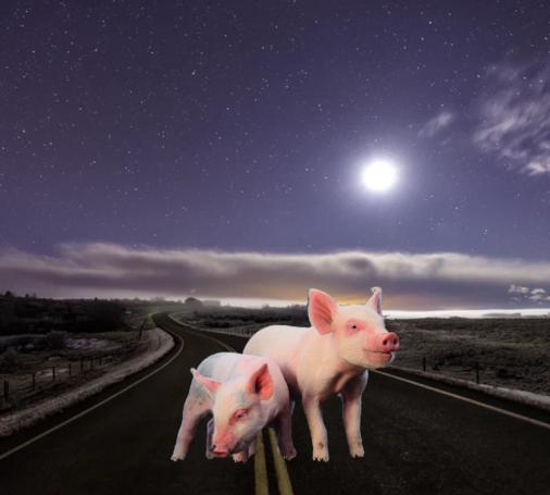 Pigs Road Moon unsplash composite
