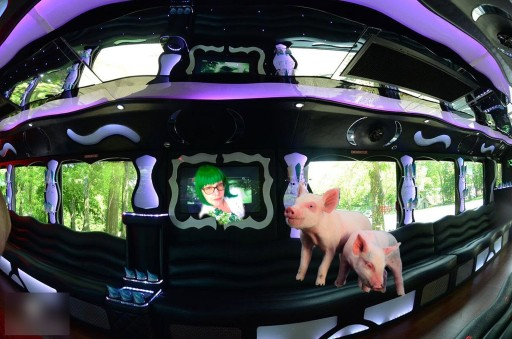 Inside Party Bus 2 pigs me