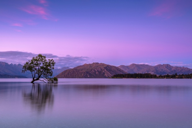 Purple lake with tree and mountains
