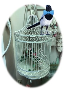 Jinx models a bow tie while perched on Dan's birdcage