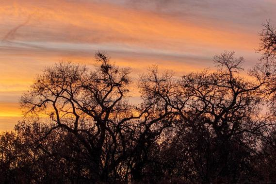 2 Gnarly Cottonwoods at sunset Tim Price